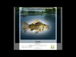 «Трофейная рыбалка» под музыку Бард  - Про рыбалку и русалку)). Picrolla